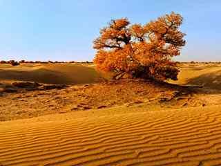 沙漠风景_沙漠风景图片_沙漠仙人掌图片_沙漠风景桌面壁纸_沙漠手机风景壁纸