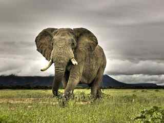 大象图片_大象桌面壁纸_大象手机壁纸_大象图片大全_大象动物壁纸