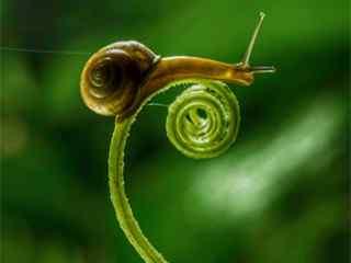 蜗牛图片_小蜗牛图片_蜗牛桌面壁纸、手机壁纸_蜗牛动物壁纸下载