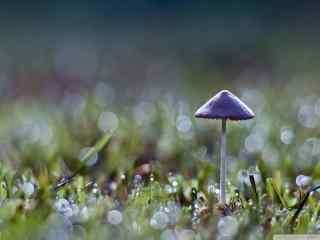 山间树林蘑菇图片 野外蘑菇桌面壁纸 植物蘑菇特写壁纸