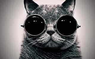 黑猫_猫咪图片_黑猫图片_黑猫警长_动物图片下载