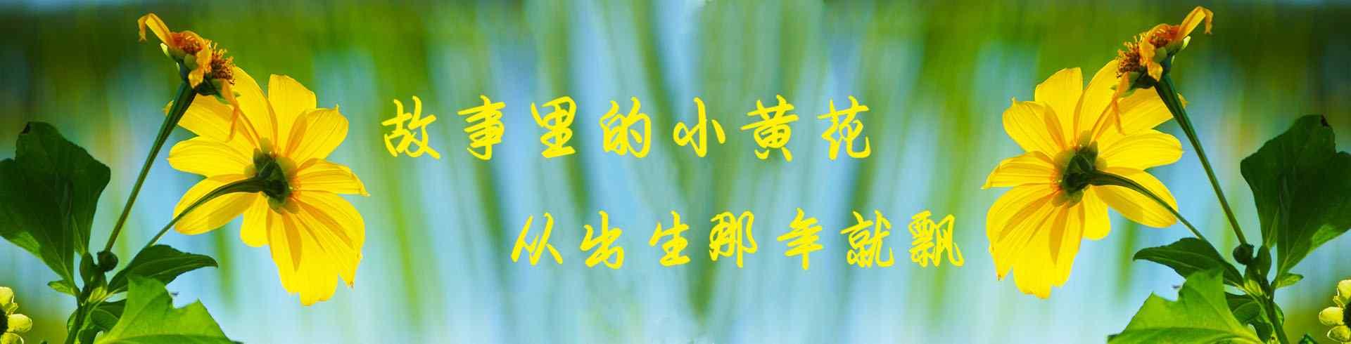 小黄花_小黄花图片_油菜花图片_小黄花桌面壁纸、手机壁纸_植物壁纸