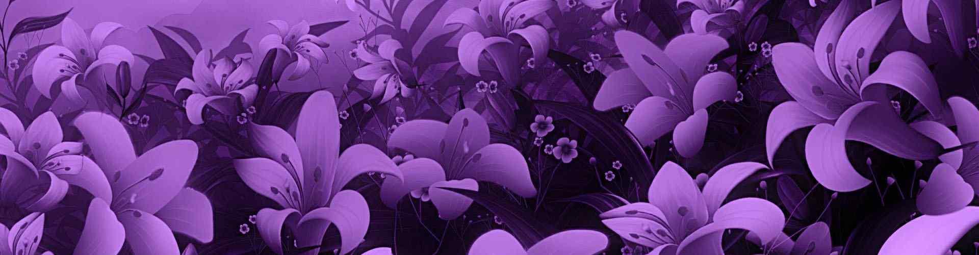 紫罗兰_紫罗兰图片_紫罗兰花图片_紫罗兰桌面壁纸、手机壁纸_美丽植物壁纸