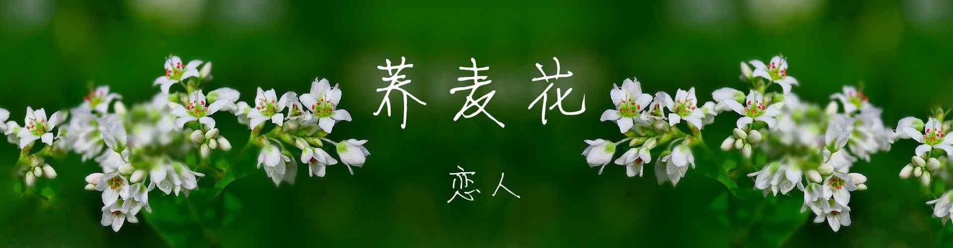 荞麦花图片_荞麦花海图片_荞麦花开图片_荞麦花桌面壁纸、手机壁纸_植物壁纸