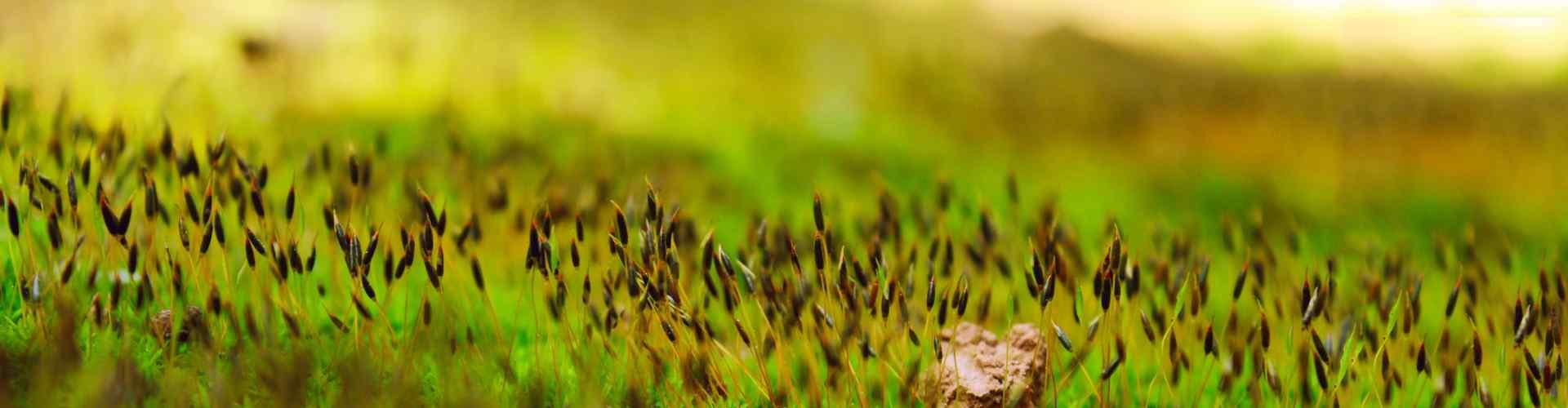 青苔_苔藓植物_苔藓植物图片_青苔植物图片_苔藓盆景_植物壁纸