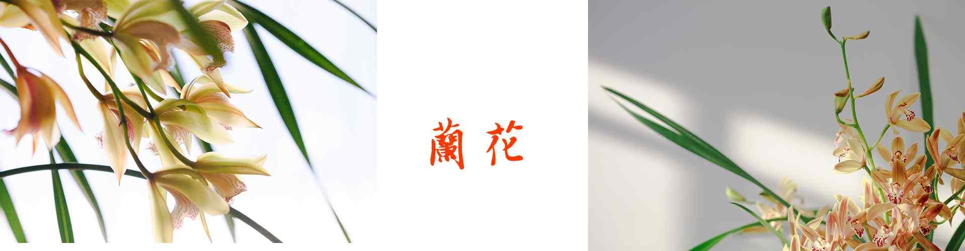 十大名花之兰花_兰花图片_春兰图片_蕙兰图片_建兰图片_墨兰图片_寒兰图片_植物壁纸