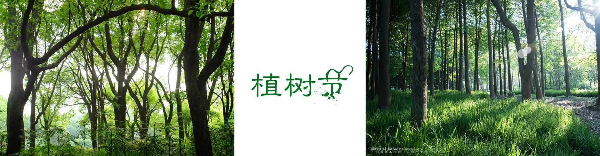 植树节_植树节图片_树林图片_树木图片_护眼壁纸_节日图片大全