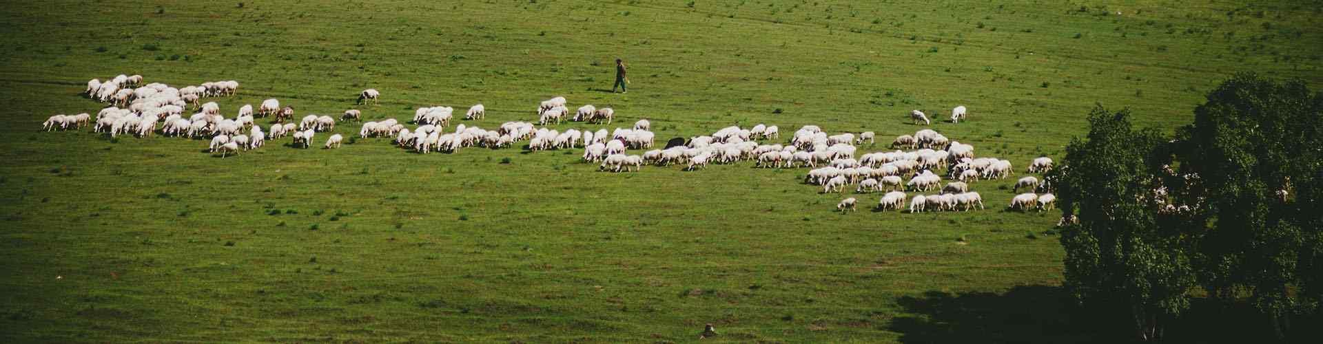 草原牧羊风景_草原风景图片_草原羊群图片_小清新风景图片_羊群图片_风景壁纸