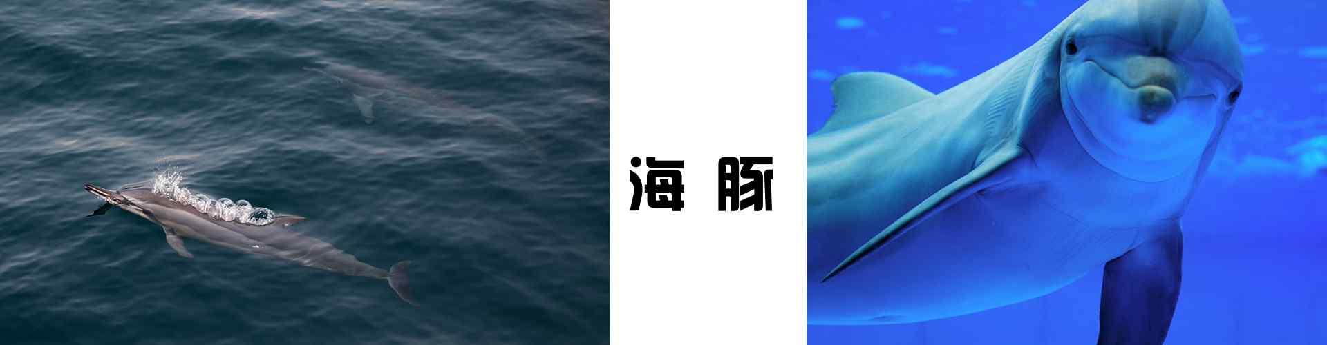 海豚_海豚图片_海豚手绘图片_海豚手机壁纸、桌面壁纸_动物壁纸