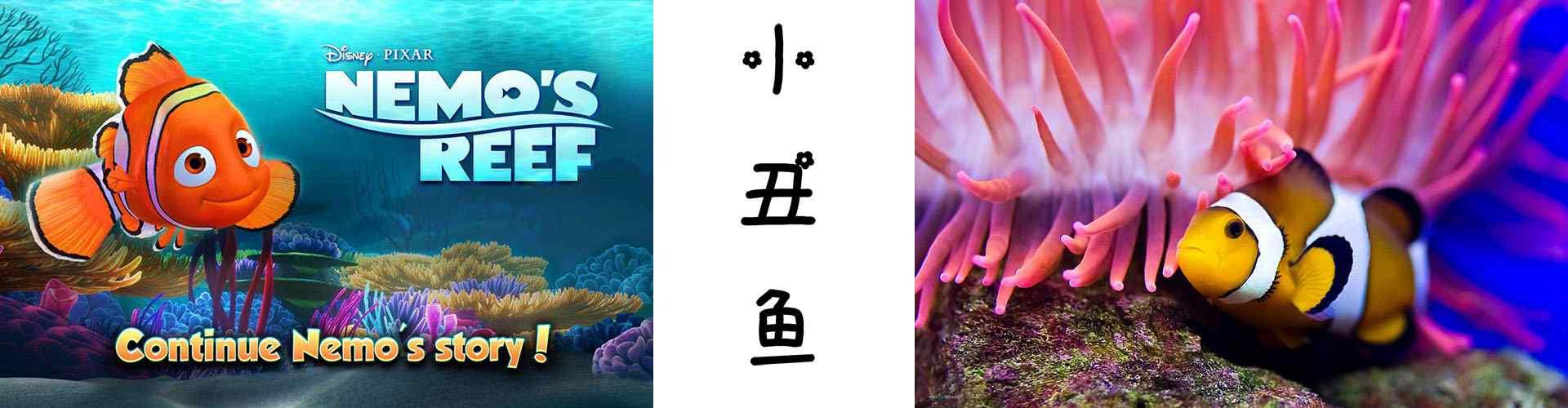 小丑鱼_小丑鱼图片_小丑鱼尼莫图片_小丑鱼桌面壁纸、手机壁纸_动物壁纸