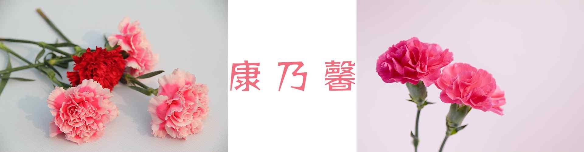 康乃馨_康乃馨图片_康乃馨花语_小清新康乃馨图片_康乃馨手机壁纸、桌面壁纸_植物壁纸