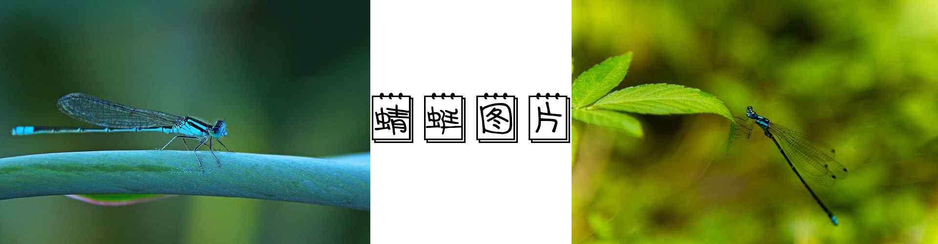 蜻蜓_蜻蜓图片_红蜻蜓图片_蓝蜻蜓图片_蜻蜓桌面壁纸、手机壁纸_动物壁纸
