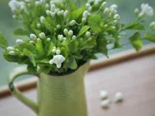 夏日鲜花图片_鲜花图片_夏日小清新鲜花图片大全_植物壁纸