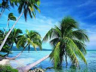 海边椰林风景_海边风景图片_椰林护眼风景壁纸_风景壁纸
