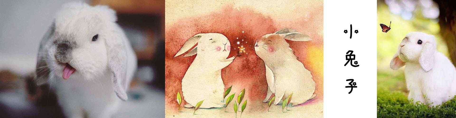 小兔子_可爱小兔子图片壁纸_毛毡小兔子图片_小兔子手机壁纸_可爱动物壁纸