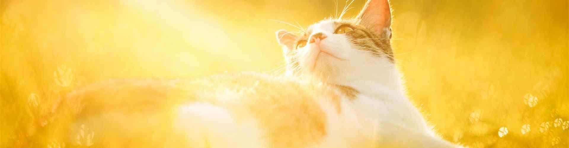 阳光图片_唯美阳光风景图片_阳光下的美女图片_太阳图片壁纸