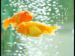 金鱼图片_可爱狐狸图片_手绘金鱼图片壁纸_金鱼手机壁纸_可爱动物壁纸