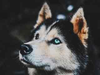 狗狗桌面壁纸_狗狗手机壁纸