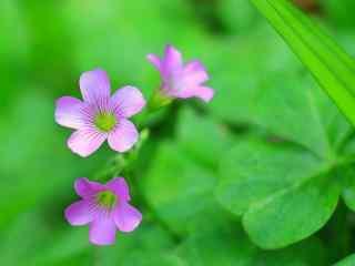 植物手机壁纸_植物图片_高清植物壁纸