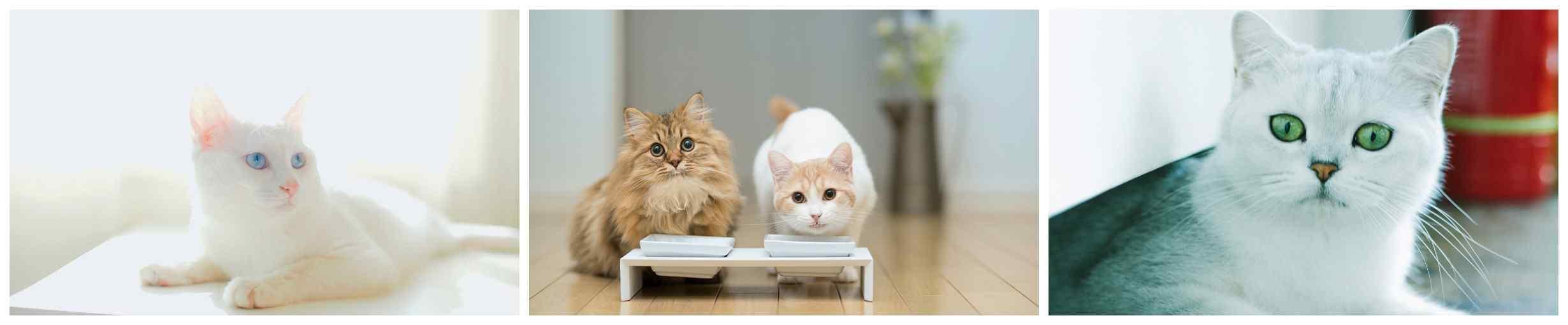 猫咪桌面壁纸_猫咪高清桌面壁纸_萌宠壁纸_动物壁纸