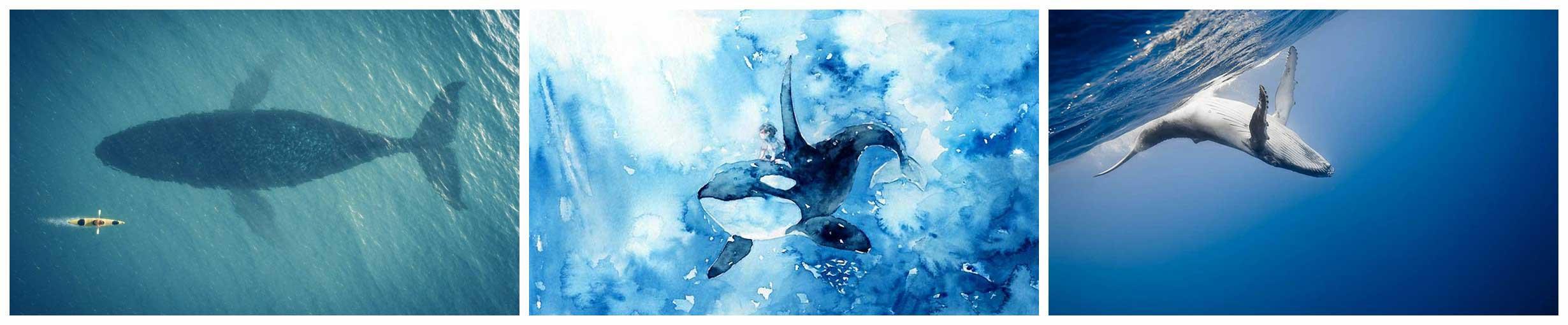 鲸鱼图片_鲸鱼电脑壁纸_鲸鱼手机壁纸_鲸鱼卡通壁纸_动物壁纸
