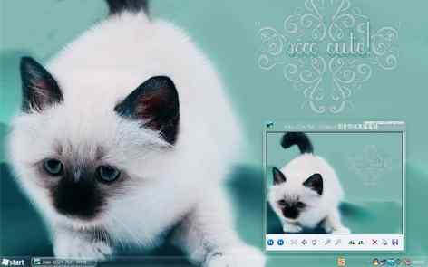 猫猫桌面wb桌面秀