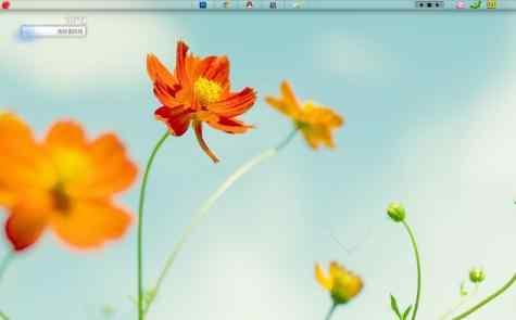 清新花卉桌面秀