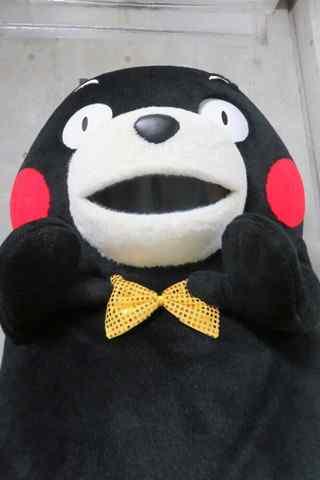 熊本熊呆萌手机壁