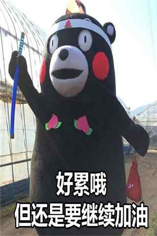 """可爱熊本熊之""""好累哦""""表情包手机壁纸图集"""