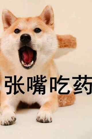 搞怪创意柴犬表情包之张嘴吃药手机壁纸