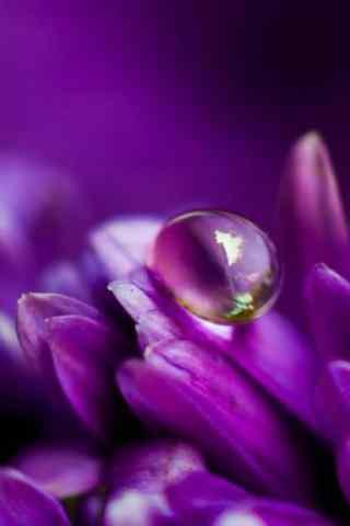 神秘的紫色花朵露
