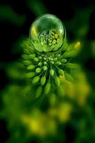 绿色小清新露水护