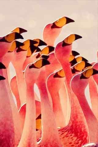 火烈鸟创意图片手机壁纸