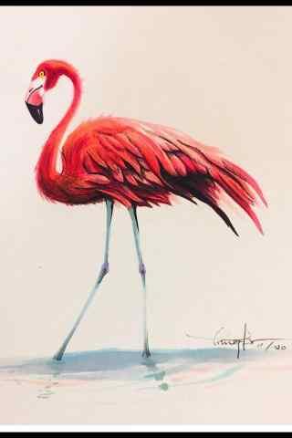 创意火烈鸟绘画作品手机壁纸