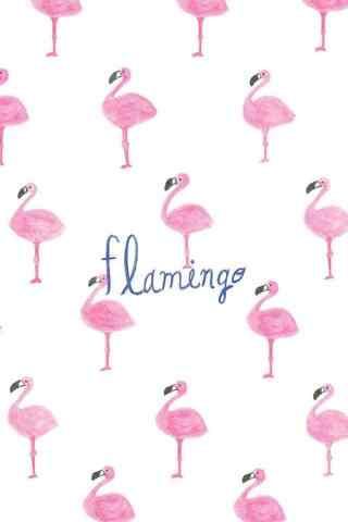 小清新火烈鸟粉色图片手机壁纸