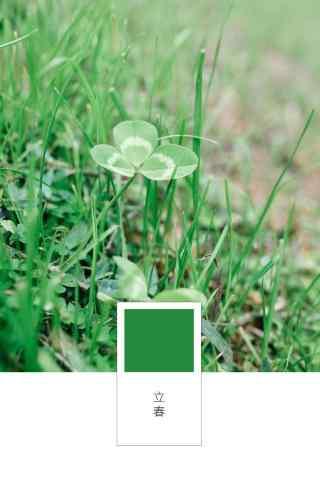 立春节气壁纸之绿色小清新三叶草