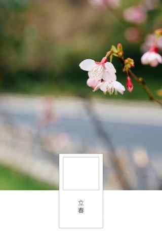 立春节气壁纸之粉色的梅花