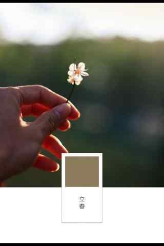 立春节气壁纸之小清新梅花图片