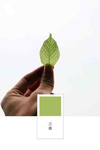 立春节气壁纸之一片嫩绿的薄荷叶