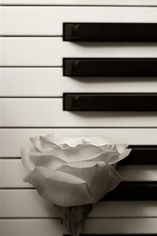 钢琴上的玫瑰花创