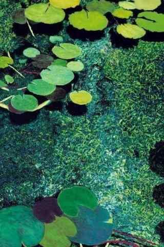 绿色水彩画莲叶手机壁纸