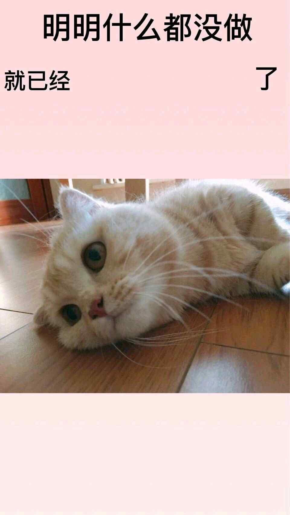 明明什么都没做颓废猫咪壁纸