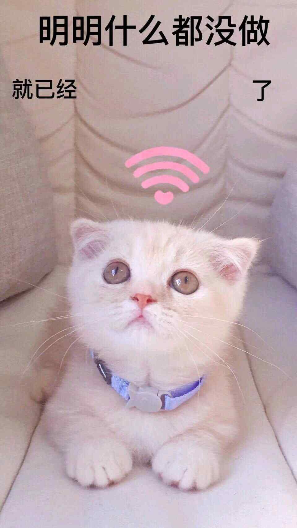 可爱猫咪版明明什么都没做壁纸