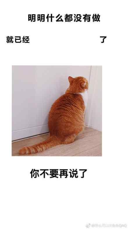 橘猫版明明什么都没做壁纸