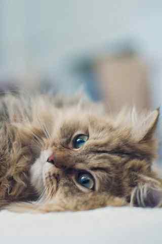 猫咪可爱手机壁纸