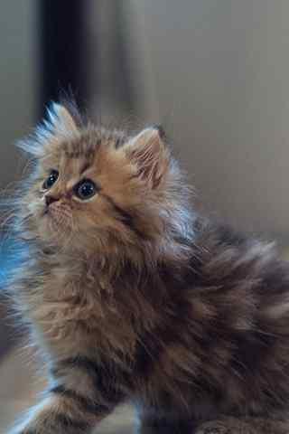 可爱猫咪炸毛手机壁纸
