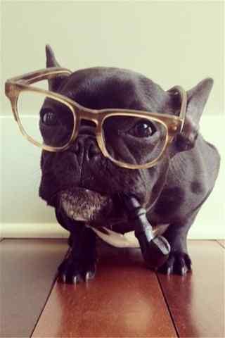 戴眼镜叼着烟斗沙皮狗手机壁纸