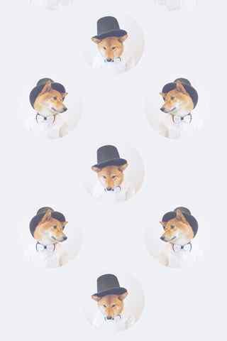 魔性柴犬手机壁纸