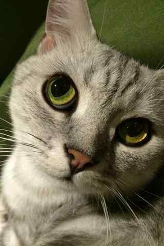 可爱美短猫咪个性表情脸手机壁纸