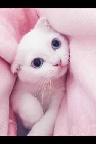 敲可爱英短小猫咪躲猫猫手机壁纸